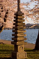 Japanese Lantern (ldrypolcher) Tags: pink blue water d50 cherry washingtondc spring nikon blossom bloom lantern tidalbasin japaneselantern cherryblossomfestival