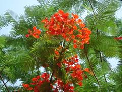 ছয় ঋতুর বারোমাস্যা / 6 Seasons of Bengal