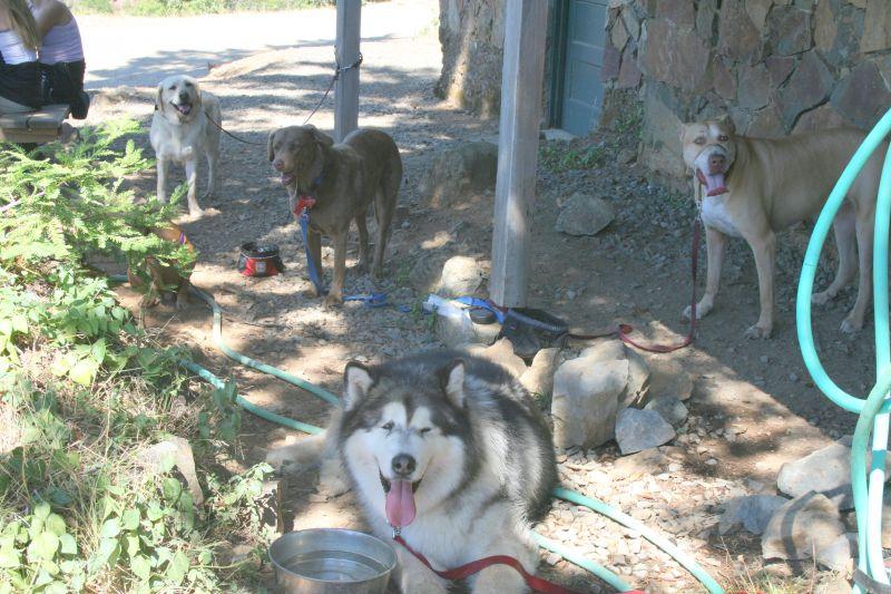 Dog Friendly Hiking Trails California