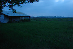 Cocuyos (Rubeck) Tags: ranch mxico mexico countryside twilight mexique veracruz firefly rancho anochecer mexiko fireflies messico luciernagas cocuyos