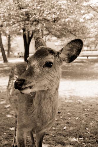 奈良公園(Nara Park) by monoblogoo