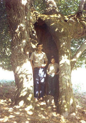 Espinheiro - castanheiro, ago/1981.