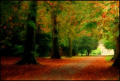 Hymn To Pan (Confused-Hair) Tags: autumn fall forest pathway orangeleaves mywinners johnstowncastle octoberleaves anawesomeshot colorphotoaward goldenphotographer confusedhair hymntopan