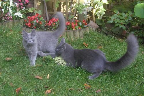 Ladoga's kittens 1859509121_10076bbd29