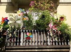 Flowers & colours (pepe50) Tags: barcelona travel flowers party apple canon flickr imac paolo colori barcellona spagna roofgarden terrazzo balcone girandola vanes blueribbonwinner girandole supershot golddragon beautifulcapture mywinners aplusphoto diamondclassphotographer flickrdiamond smarritori pepe50 dragongoldaward