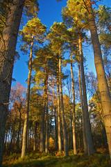 Rupert's Wood