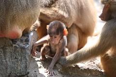 IMG_4686_emmen (Arie van Tilborg) Tags: zoo dieren emmen noorderdierenpark dierentuin mediacollege arievantilborg