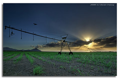 IrrigatoR (DanielKHC) Tags: sunset sun bird field cane island interestingness bravo sony sugar explore rays agriculture alpha mauritius soe hdr irrigation a100 naturesfinest ilemaurice interestingness10 photomatix magicdonkey tonemapped flickrsbest 7exp tamron1118mm anawesomeshot danielcheong flickrplatinum hdrenfrancais superbmasterpiece infinestyle goldenphotographer diamondclassphotographer flickrelite danielkhc theperfectphotographer explore09jan08