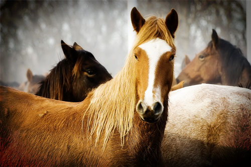 gathering mares 397
