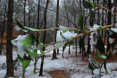South Carolina Snow