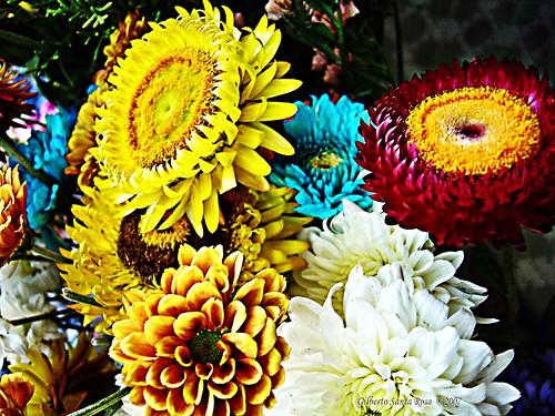 Bouquet .............DSC06623a