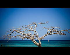 (indian nomad) Tags: travel blue sea vacation sun tree beach 350d 50mm cuba rebelxt eos350d pblog lightroom brisas guardalavaca holguin canonef50mmf18ii skycuba indiablueca