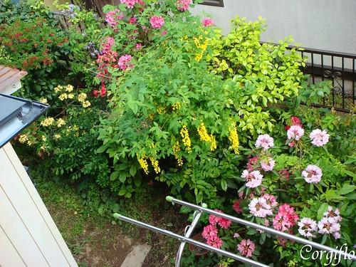notre jardin vu du balcon
