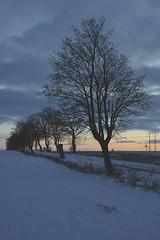 Winter Scania Sweden (Budoka Photography) Tags: landscape nature tree sunset winter snow outdoor manual handheld manualondigital canonllens canonfd50mmlf12