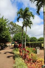 IMG_0584 (Psalm 19:1 Photography) Tags: hawaii oahu diamond head polynesian cultural center waikiki haleiwa laie waimea valley falls