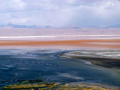 Laguna Colorada. (anarubini) Tags: verde america de south bolivia roadtrip rbol andes desierto laguna eduardo 2012 reserva uyuni piedra colorada sudamrica siloli avaroa