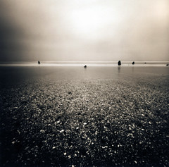 an oceanic ghost forest (manyfires) Tags: blackandwhite shells film beach oregon pinhole pacificocean pacificnorthwest zero2000 neskowin zeroimage palabra ghostforest pinholebb