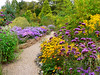 Picton Garden (Lazy B) Tags: september malvern worcestershire fz5 2007 michaelmasdaisies colwall lazyb pictongarden oldcourtnurseries nccpgplantheritagecollection autumnfloweringasters
