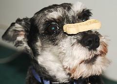 Cookie Balancing