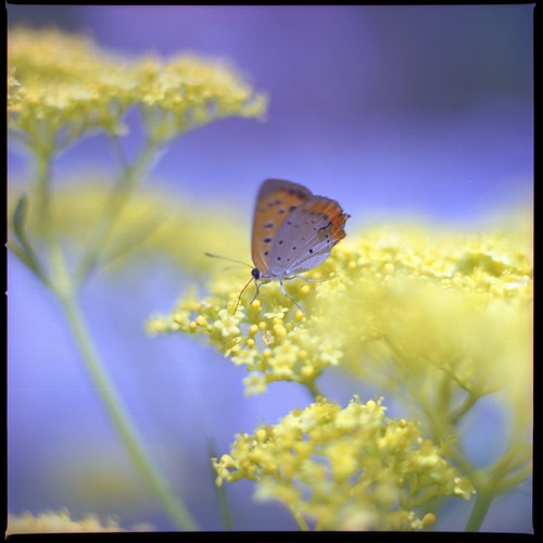 Yellow and light blue (HASSELBLAD 500C/M) (by potopoto53age)