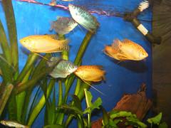 Fish-12 by jhartshorn, on Flickr