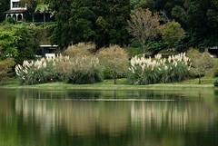 """lagoa das furnas (MV a.k.a. """"O Indivíduo"""") Tags: portugal nikon nef marco lagoa reflexo ventura azores furnas açores g7 sigma70200mmf28 d80 nikond80 marcoventura afaa"""