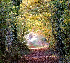 Autumn tree tunnel (tina negus) Tags: autumn trees lincolnshire footpath scenics 25faves aplusphoto culverthorpe exploreunexplored fiveflickrfavs thatsbostin zenenlightenmentgroup scenicsnotjustlandscapes