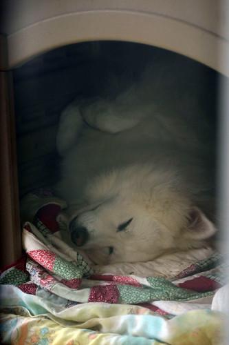 Daisy snoozing.