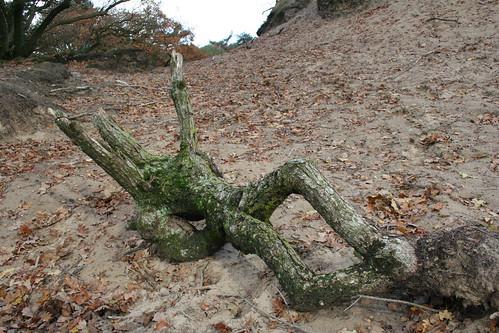 liggende vrouw boom