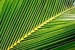 Palm Fronde (From Afghanistan With Love) Tags: green nature canon indonesia leaf geometry palm diagonal zeerak safrang hamesha javaid diamondclassphotographer flickrdiamond treeofhonor