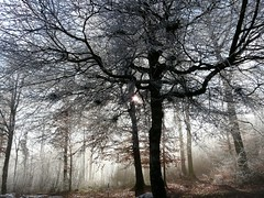 Mystical  (Dave :-) (on and off)) Tags: winter tree topf25 fog dave forest frozen mystical soe naturesfinest supershot flickrsbest mywinners abigfave impressedbeauty aplusphoto unature superbmasterpiece unaturefav naturessilhouettes theperfectphotographer