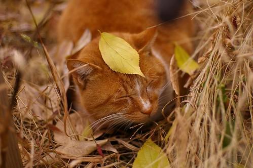 Leaf on the head