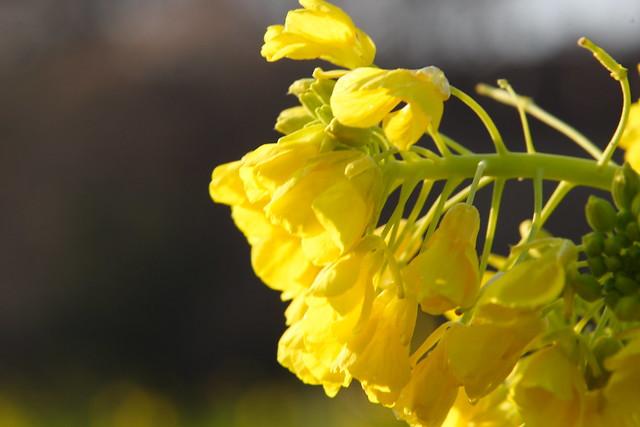 冬に咲く春の花