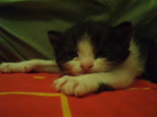 Gatos I