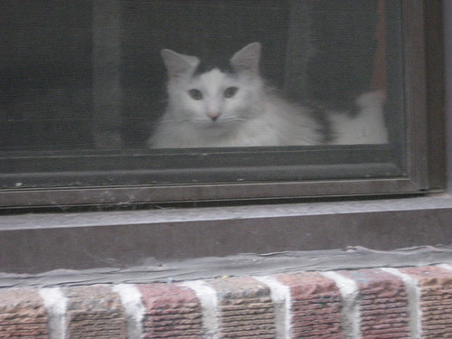 window kitty