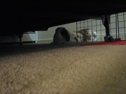 under the new bed