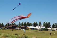 Squid Wide shot (David Stringer) Tags: nikon australia nikond50 kites squid technorati portfairy davidstringer