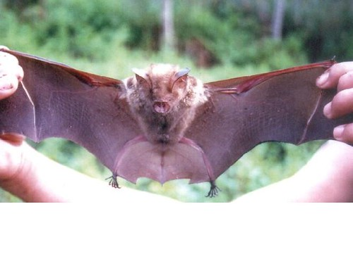 2230764438_6b0d7afa5e - CRAZY ABOUT BATS! - Science and Research