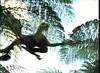 41 microraptor glides