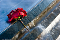 Rose and Memorial Waterfall (BACHarbin) Tags: flowers red roses usa water dead sadness washingtondc dc washington districtofcolumbia quiet personal honor photoblog waterfalls fallen nationalmall remembered fountains koreanwarveteransmemorial inmemoriam sacrifice valor inmemoryof slowwater submittedtophotoshelter nationalmallandmemorialparks