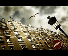 Mouette  Paris / Gull in Paris (VeNiVi) Tags: street city light sky paris bird clouds photoshop flickr lumire gull ciel estrellas nuages rue soe oiseau ville mouette goldenglobe 50faves superaplus aplusphoto isawyoufirst platinumheartaward theperfectphotographer lampdaire