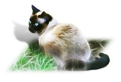 Semi-Fractalius Feline ~(CatChallenge.33)~ on white (Gravityx9) Tags: photoshop fluffy chop multicolored magical find specialeffects 0308 blogthis smorgasbord americaamerica whathaveyoudone creativephoto flickrcats kittycrown catchallenge kacey97007 kingofmyhome psfofamily totalphotoshop showoffyourcats 033008 catchallenge33