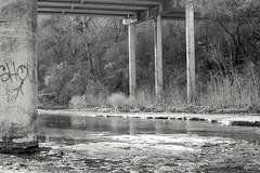 Austin, Texas (Barb McCourt) Tags: graffiti water creek show vegatation blackandwhitephotography blackandwhite bnw bw nikond7200 nikon austin texas