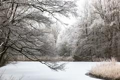 Winter / Hiver (tribsa2) Tags: nederlandvandaag forest foret bos winter hiver