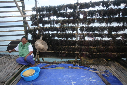 Tibongko farmer with rows of seaweed being dried