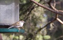 Bird on a feeder