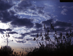 (abdukted1456) Tags: camera sky plants ny newyork silhouette clouds rural toy spring promo weeds kodak dusk country 110 grain pointandshoot expired promotional vivitar avon vr kodacolor schaghticoke
