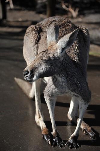 Perth 2011 - Caversham Wildlife Park (2)