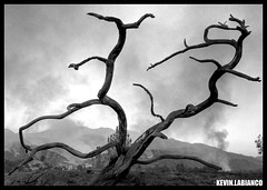 Desolation (Kevin Labianco) Tags: santiago canyon fire orange county southern california october mission viejo irvine lake mountains saddleback brushfire ash smoke hazardous socal wildfire wildfires orangecounty tree burned desolation blackwhite clouds