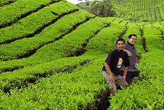 Artpixel & Me (irwandy) Tags: cameron malaysia nd cameronhighlands teaplantation boh perak bohtea irwandy sungaipalas sungeipalas sgpalas ladangteh